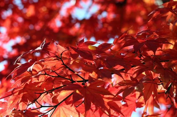 紅葉無料写真素材