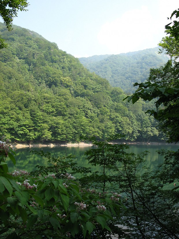 森林、湖、無料写真素材010