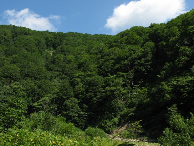 森林、無料写真素材012