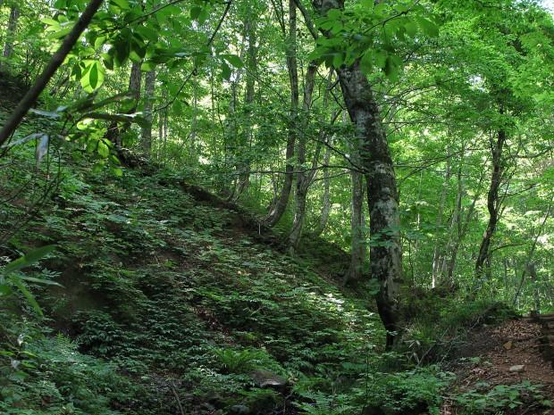 森林、無料写真素材016