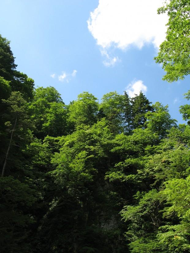 森林、空、無料写真素材020