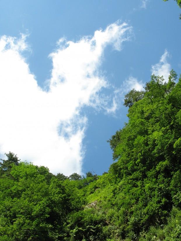 森林、空、無料写真素材023