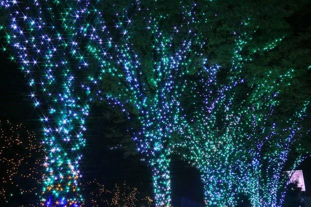 Xmas(クリスマス)イルミネーション007