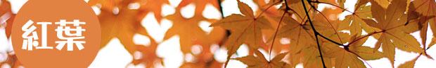 紅葉の無料写真素材
