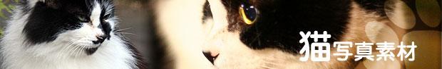 猫無料滚球体育直播