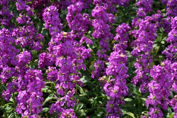 花(華)の無料写真素材001