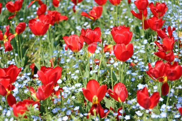 花(華)の無料写真素材018