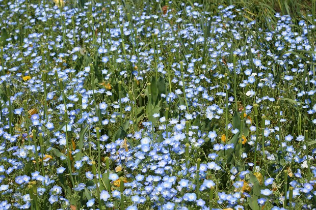 花(華)の無料写真素材021
