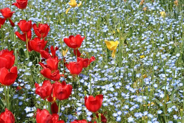 花(華)の無料写真素材022