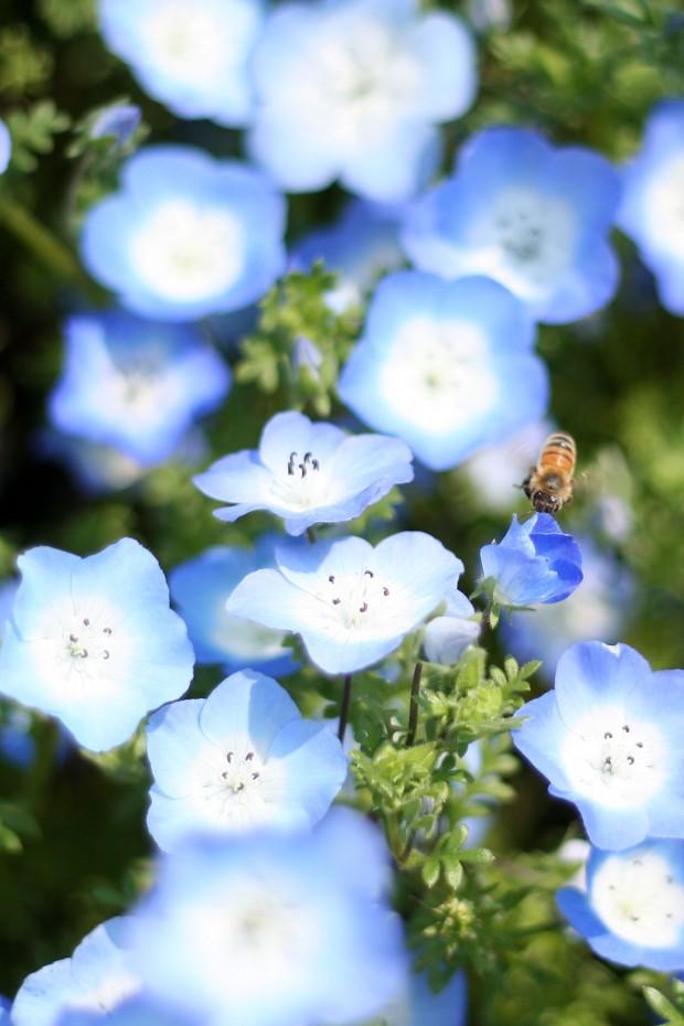 花(華)の無料写真素材023