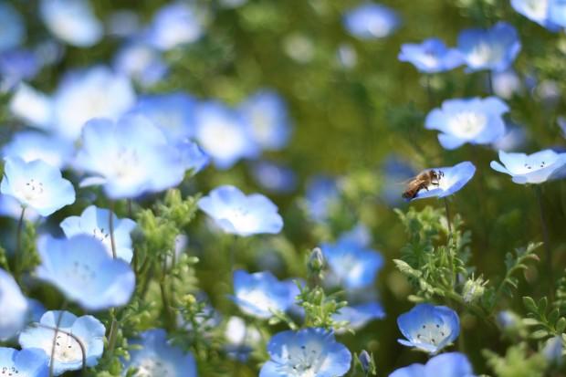 花(華)の無料写真素材024