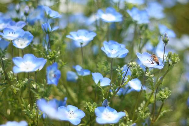 花(華)の無料写真素材025