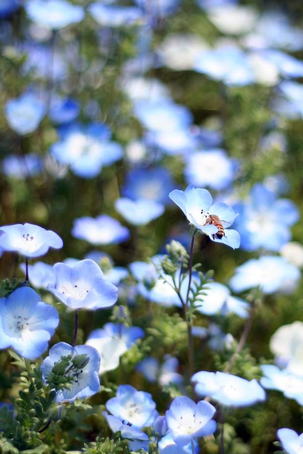 花(華)の無料写真素材026
