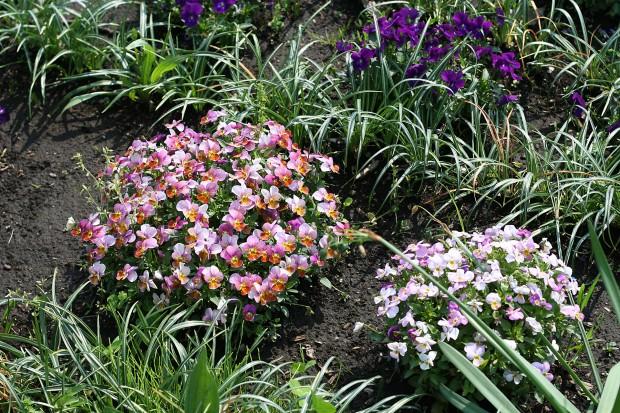 花(華)の無料写真素材027
