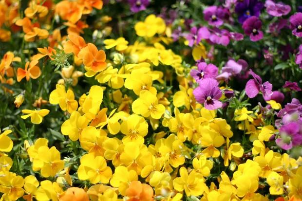 花(華)の無料写真素材030