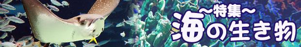 海の生き物バナー