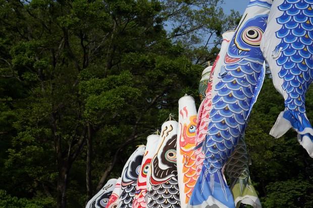 鯉幟(こいのぼり)フリー写真素材006