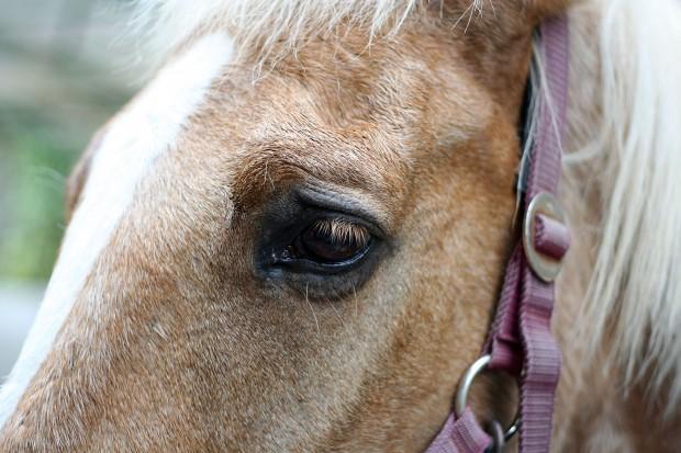 馬(ウマ)フリー写真素材019