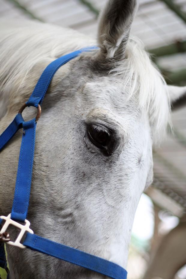 馬(ウマ)フリー写真素材032