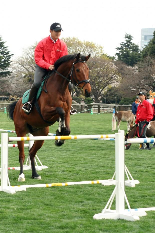馬(ウマ)フリー写真素材038
