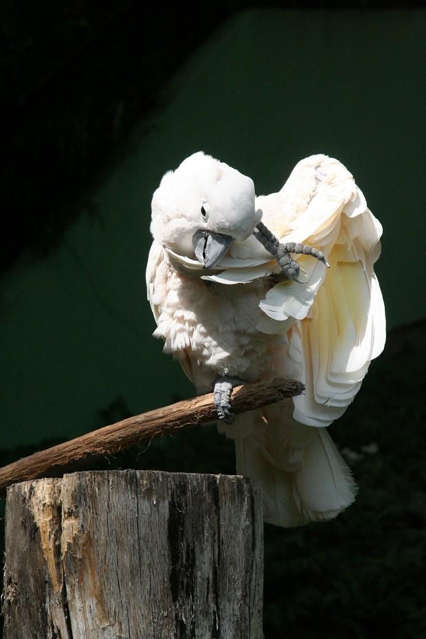 鳥フリー写真素材06