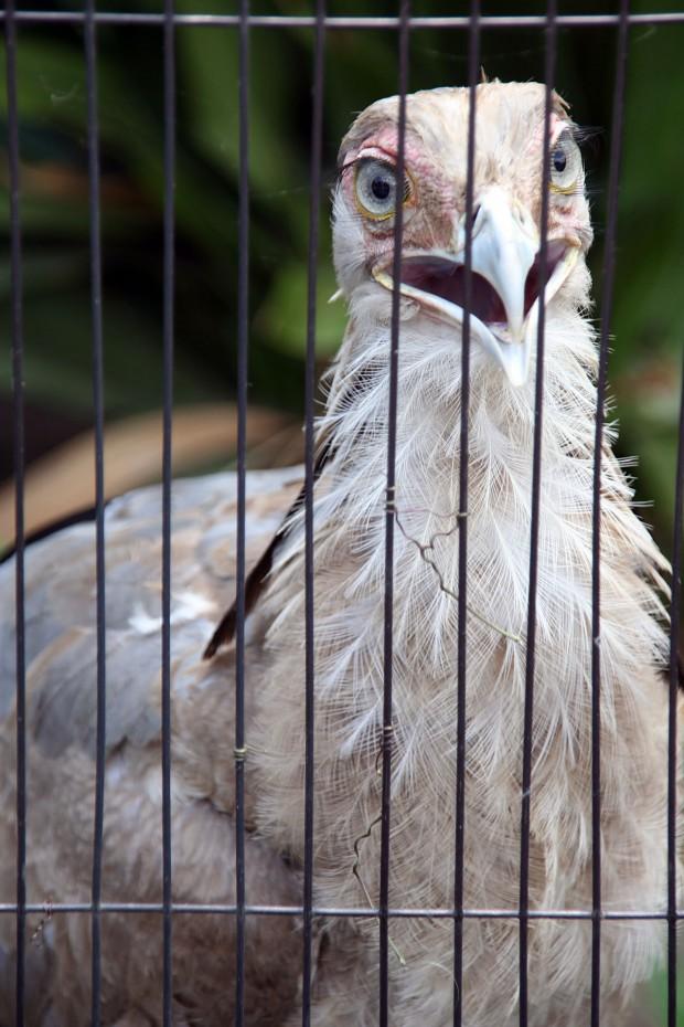 鳥フリー写真素材25