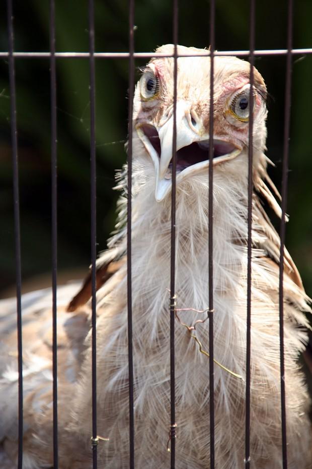 鳥フリー写真素材26