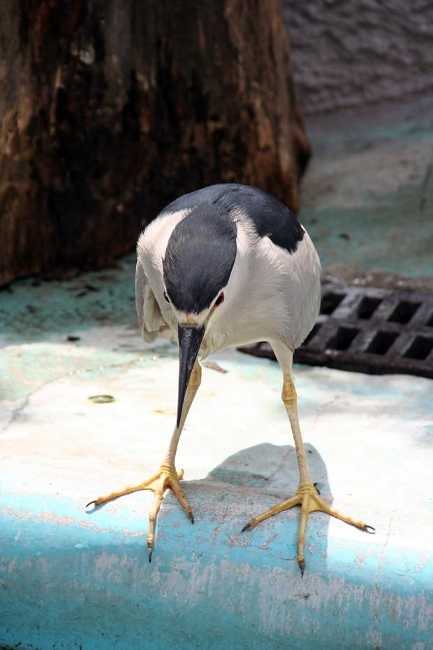 鳥フリー写真素材27