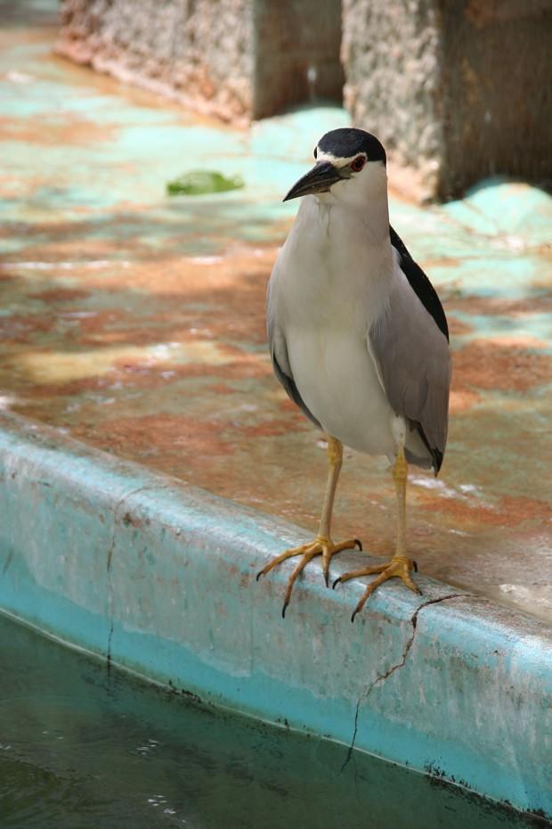 鳥フリー写真素材30