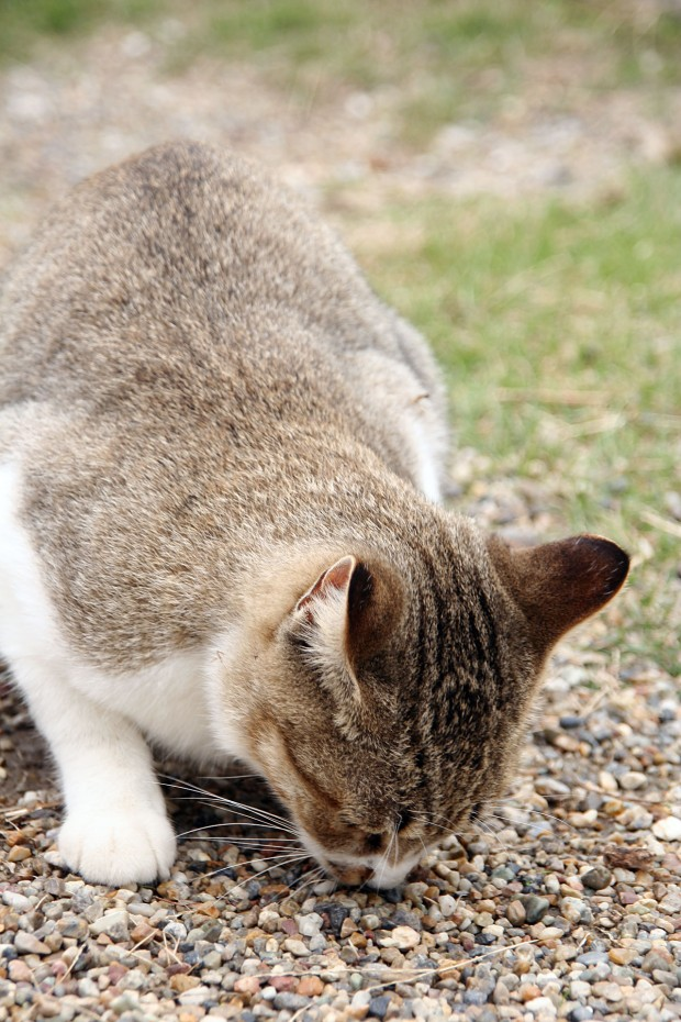猫フリー写真素材13