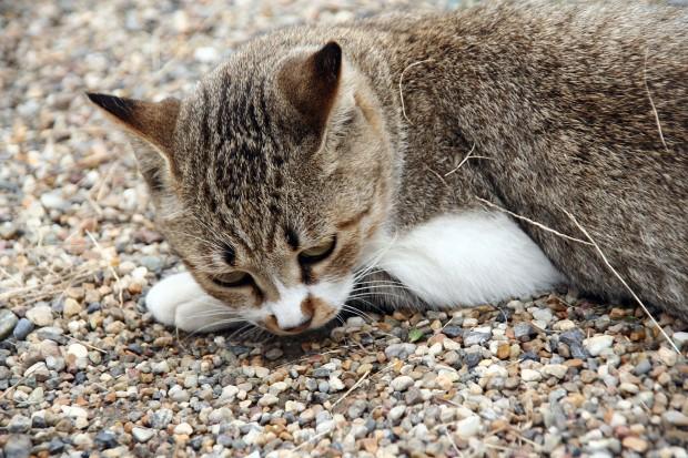 猫フリー写真素材14