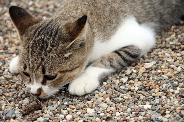猫フリー写真素材16