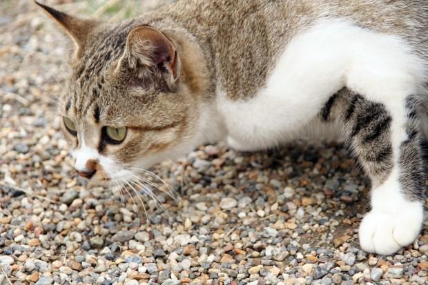 猫フリー写真素材18