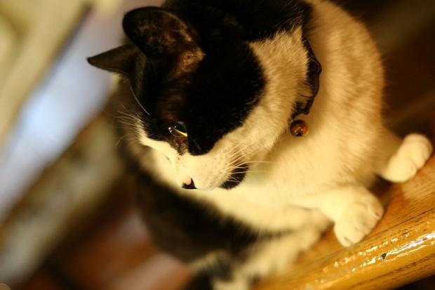 猫フリー写真素材29