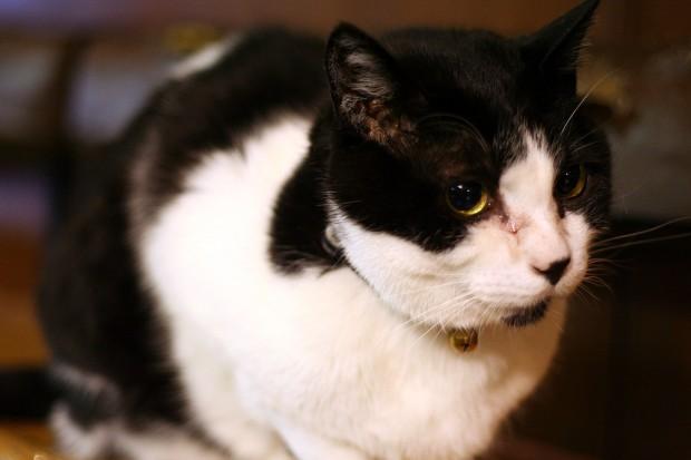 猫フリー写真素材30