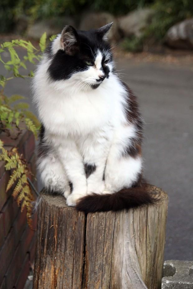 猫フリー写真素材32