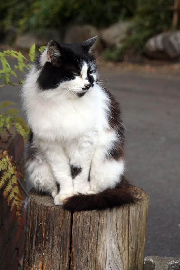 猫フリー写真素材33