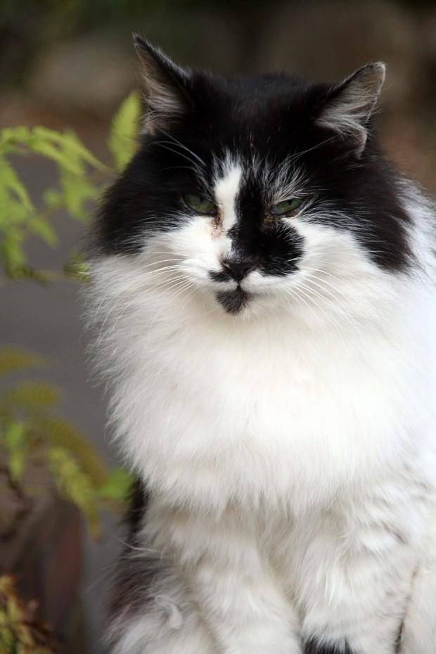 猫フリー写真素材35
