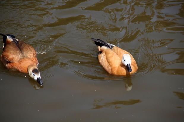 鳥フリー写真素材37