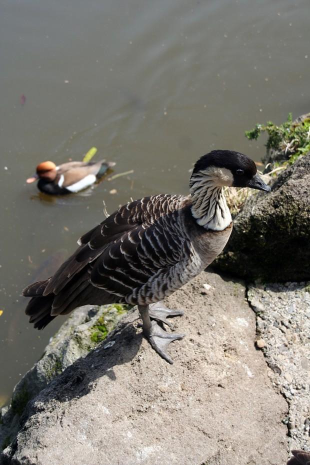 鳥フリー写真素材53