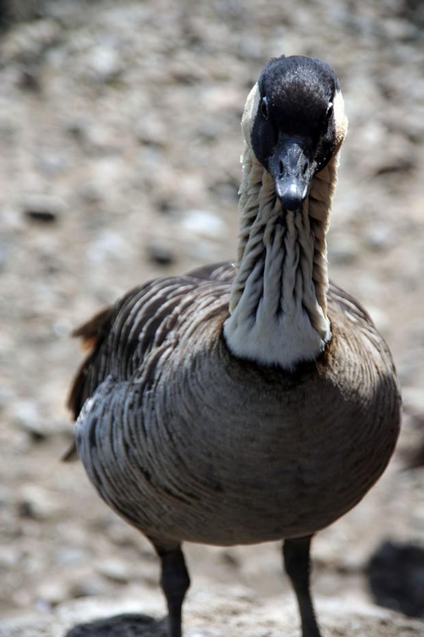 鳥フリー写真素材59