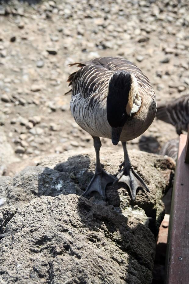 鳥フリー写真素材61