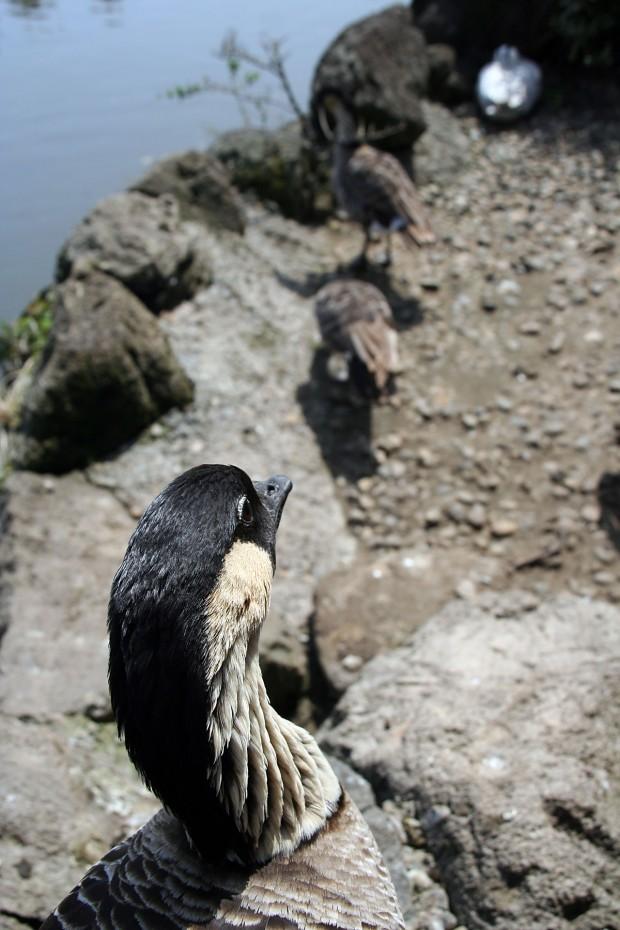 鳥フリー写真素材67