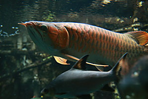 魚サムネイル