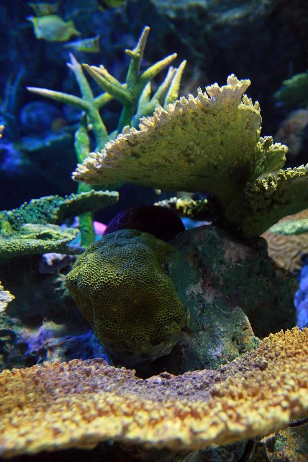 珊瑚(サンゴ)002