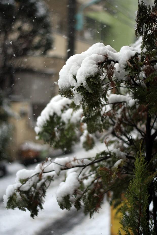 雪景色006