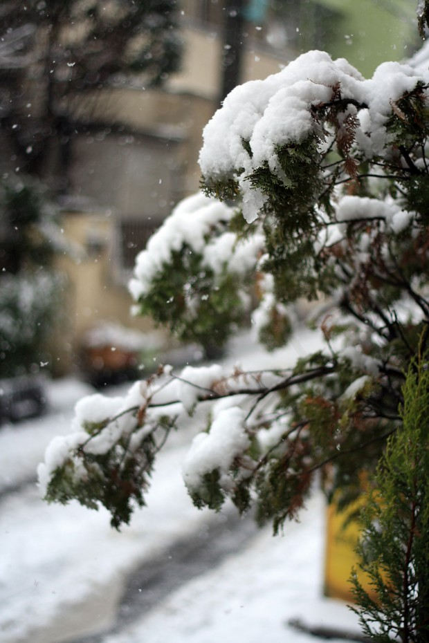 雪景色007