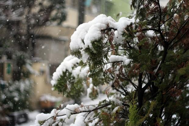 雪景色008