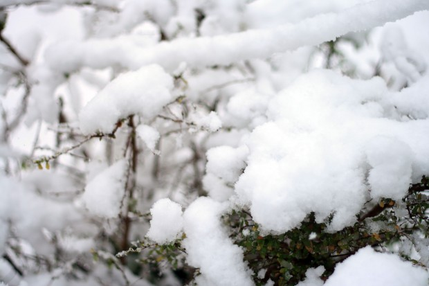 雪景色011