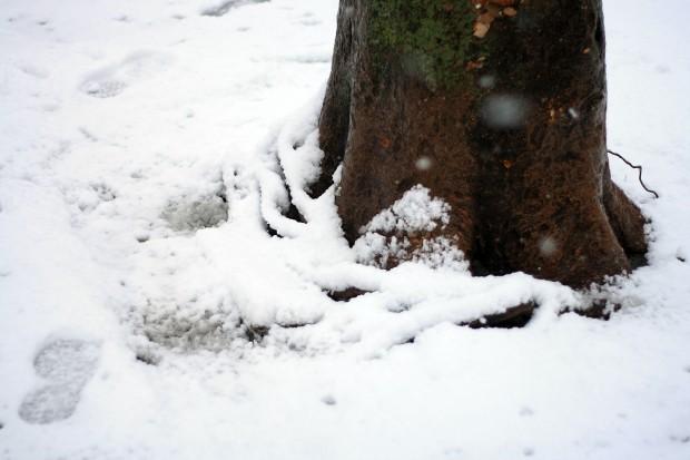 雪景色012